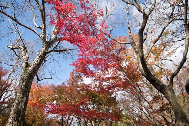東福寺【紅葉】1