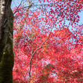 東福寺【紅葉】2