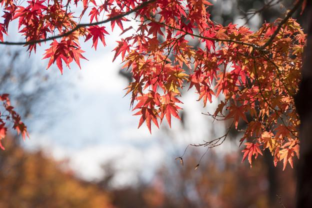 東福寺【紅葉】3