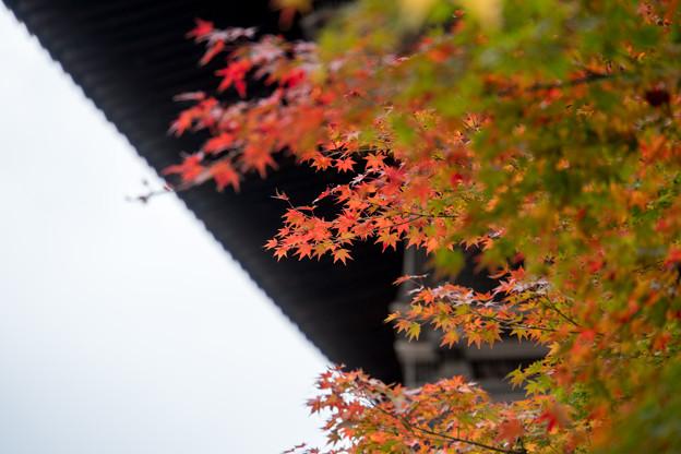 東寺【五重塔と紅葉】3