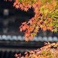 東寺【五重塔と紅葉】4