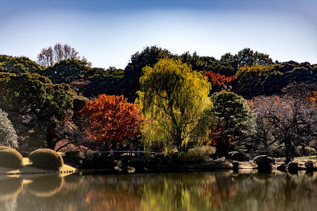 新宿御苑【上の池近辺の紅葉】2