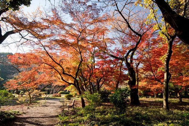 新宿御苑【上の池近辺の紅葉】4