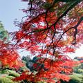 Photos: 新宿御苑【上の池近辺の紅葉】7銀塩