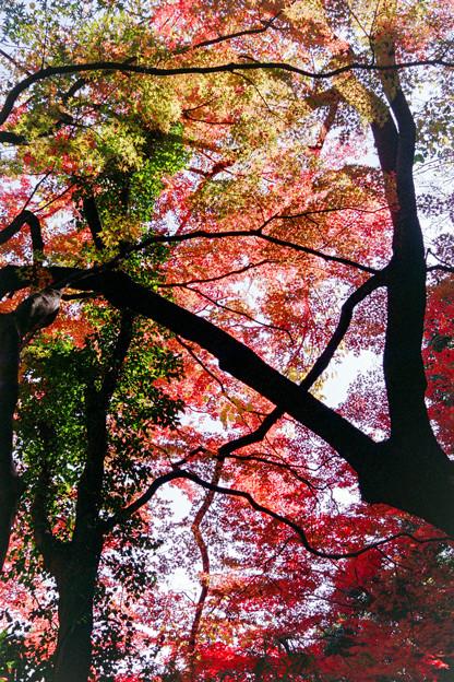 新宿御苑【上の池近辺の紅葉】8銀塩