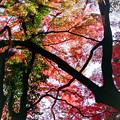 Photos: 新宿御苑【上の池近辺の紅葉】8銀塩