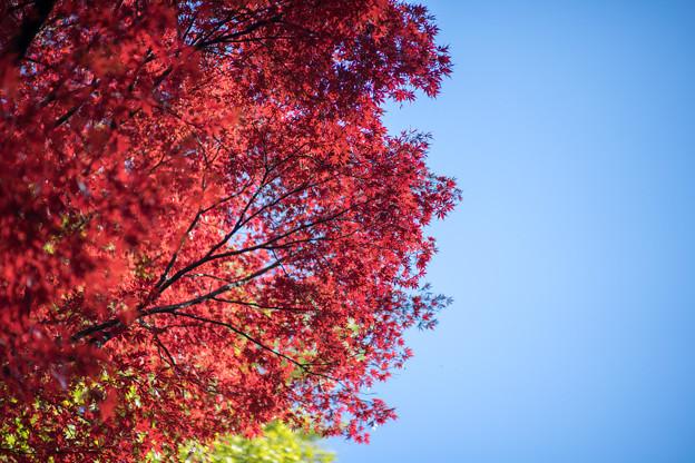新宿御苑【上の池近辺の紅葉】9