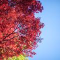 Photos: 新宿御苑【上の池近辺の紅葉】9