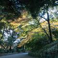 Photos: 新宿御苑【旧御涼亭近辺の紅葉】2