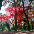 Photos: 新宿御苑【中の池近辺の紅葉】1銀塩