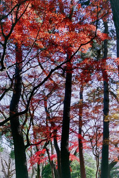 Photos: 新宿御苑【中の池近辺の紅葉】2銀塩