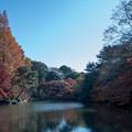 Photos: 新宿御苑【下の池近辺の紅葉】2