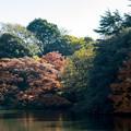 Photos: 新宿御苑【下の池近辺の紅葉】3
