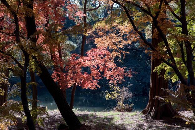 新宿御苑【下の池近辺の紅葉】7