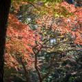Photos: 新宿御苑【もみじ山近辺の紅葉】4