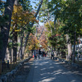 Photos: 九品仏浄真寺【紅葉】1-1