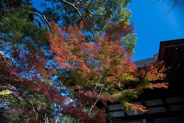 Photos: 九品仏浄真寺【紅葉】2-1