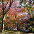 Photos: 九品仏浄真寺【紅葉】2-2