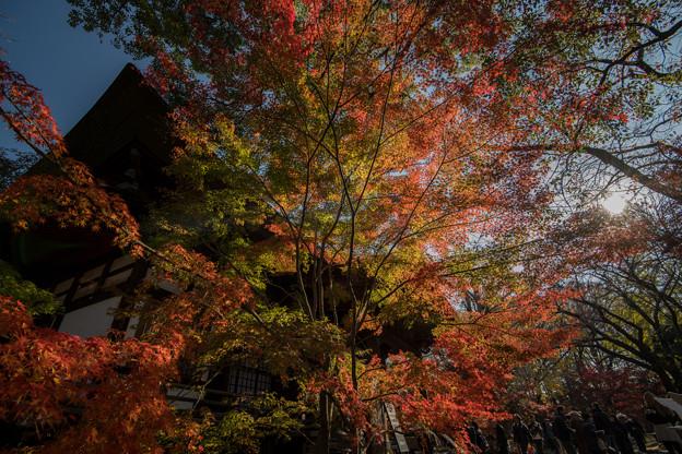 Photos: 九品仏浄真寺【紅葉】2-3