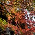 九品仏浄真寺【紅葉】2-5