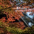 Photos: 九品仏浄真寺【紅葉】2-6