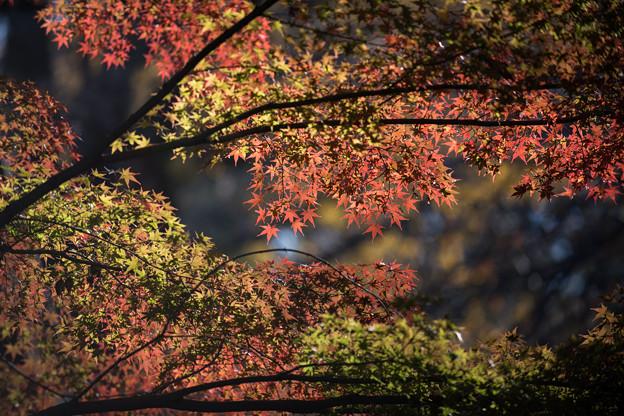 Photos: 九品仏浄真寺【紅葉】2-7