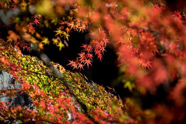 Photos: 九品仏浄真寺【紅葉】2-8