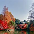新宿御苑【下の池近辺の紅葉】4銀塩修正後