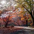 Photos: 神代植物公園【かえで園: 神代小橋付近】1銀塩