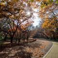 神代植物公園【かえで園: 神代小橋付近】2