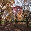 神代植物公園【かえで園: 神代小橋付近】3