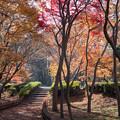 神代植物公園【かえで園: 神代小橋付近】4