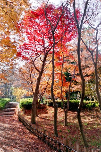 神代植物公園【かえで園: 神代小橋付近】5銀塩