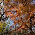 神代植物公園【かえで園: 神代小橋付近】6
