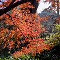 神代植物公園【かえで園: 神代小橋付近】7