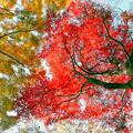 Photos: 神代植物公園【かえで園: 神代小橋付近】8銀塩