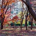 神代植物公園【かえで園: 灯籠付近】1銀塩