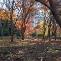 Photos: 神代植物公園【かえで園: 灯籠付近】2