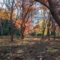神代植物公園【かえで園: 灯籠付近】2