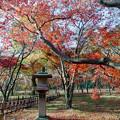 神代植物公園【かえで園: 灯籠付近】3銀塩