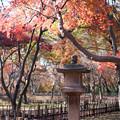 神代植物公園【かえで園: 灯籠付近】4