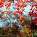 神代植物公園【かえで園: 灯籠付近】5銀塩