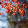 神代植物公園【かえで園: 灯籠付近】6