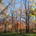 神代植物公園【雑木林付近の紅葉】1