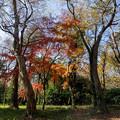 神代植物公園【雑木林付近の紅葉】2