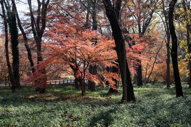 神代植物公園【雑木林付近の紅葉】3