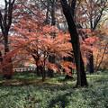 Photos: 神代植物公園【雑木林付近の紅葉】3