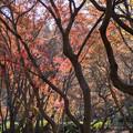 神代植物公園【雑木林付近の紅葉】4