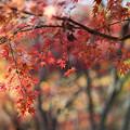 神代植物公園【雑木林付近の紅葉】5