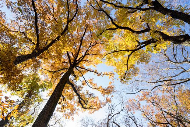 神代植物公園【雑木林付近の紅葉】7